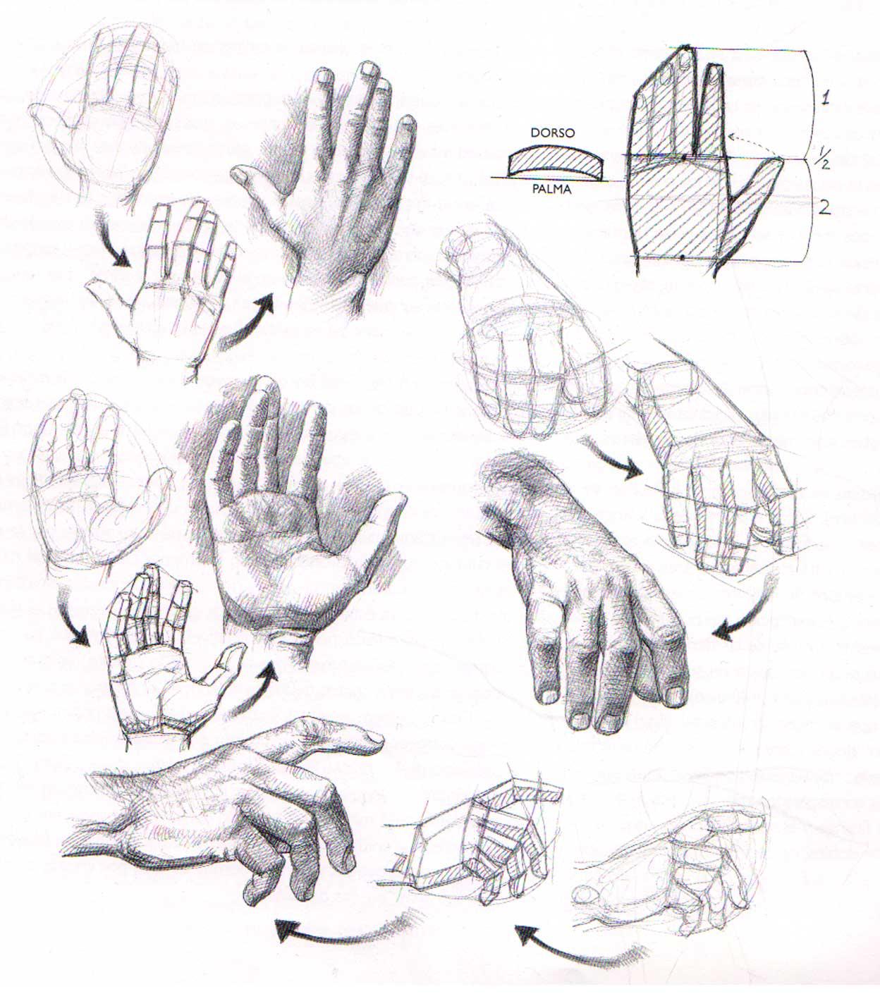 ejercicios de las manos: