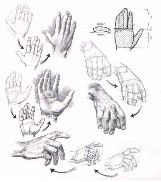 Aprender a dibujar mano y pies Dibujo de manos  El Dibujante
