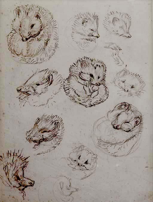 Los Dibujos Más Caros De Beatrix Potter El Dibujante